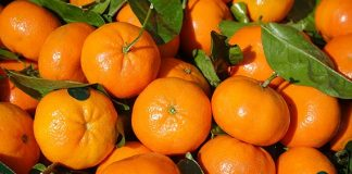 MSC Completes First Ever Shipment of Clementines from Chile to China